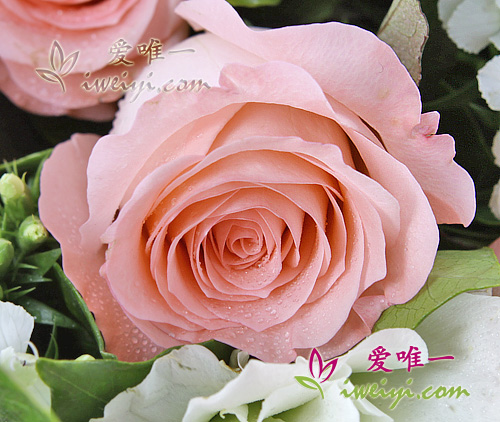 composition florale de roses