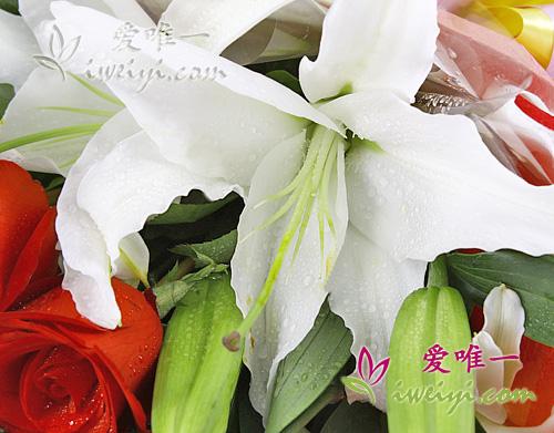 white perfume lilies