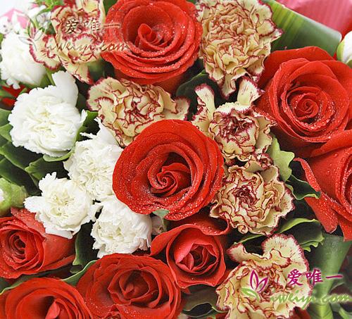 multicolor carnations