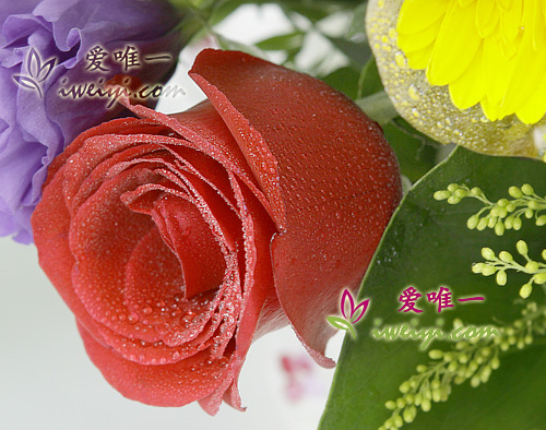 send a basket of spray red roses and yellow gerberas to China