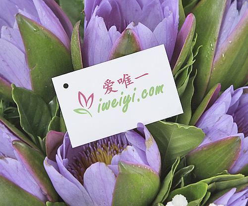 The bouquet of flowers « Sleeping beauty »