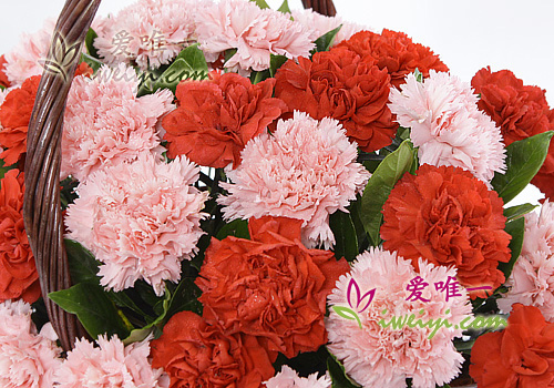 basket of red carnations and pink carnations