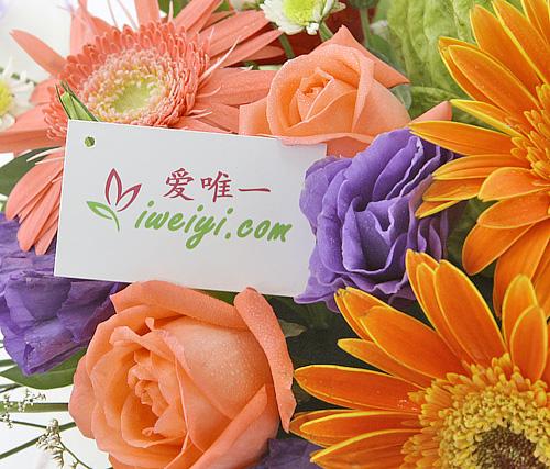 send a bouquet of pink roses, pink gerberas, orange gerberas