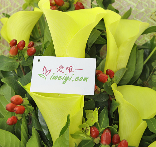 send a bouquet of yellow calla lilies to China