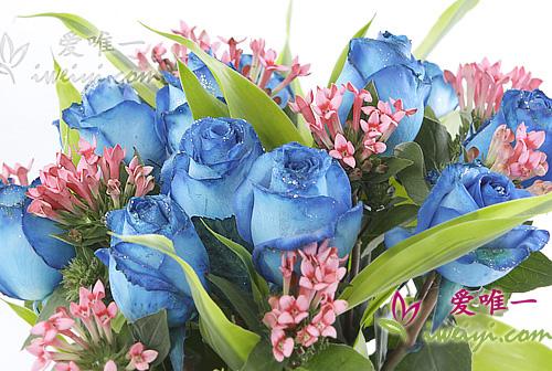 Vase of 13 blue roses