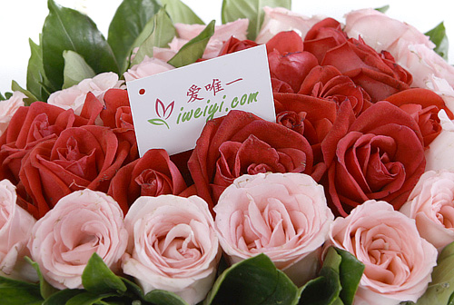 red roses and pink roses